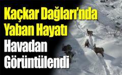 Kaçkar Dağları'nda Yaban Hayatı Havadan Görüntülendi