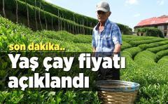 Yaş çay kilo fiyatı açıklandı...