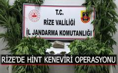 RİZE'DE HİNT KENEVİRİ OPERASYONU