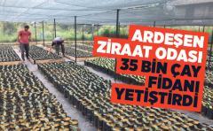 Ardeşen Ziraat Odası 35 bin çay çeliği fidesi yetiştirdi